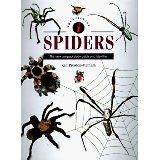 Identifying Spiders: The New Compact Study Guide and Identifier